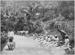 Slaves on a Plantation in Jamaica