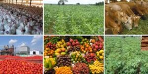 Categories of agriculture